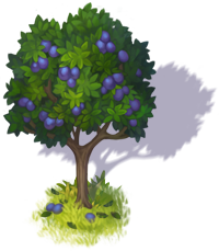 plum_tree_3.png